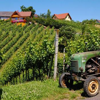 Klöchberg vineyards, Volcano land, Styria, Austria