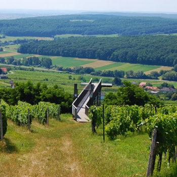 Weinblick, Burgenland, Austria