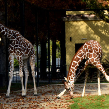 Vienna Zoo, Schönbrunn, Vienna, Austria