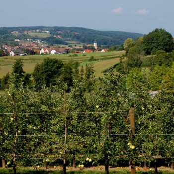 Fruit orchards outside , Bad Waltersdorf, Styria, Austria