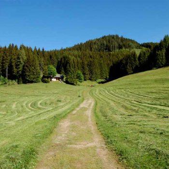 Hiking through pastures at Teichalm, Almenland, Styria, Austria