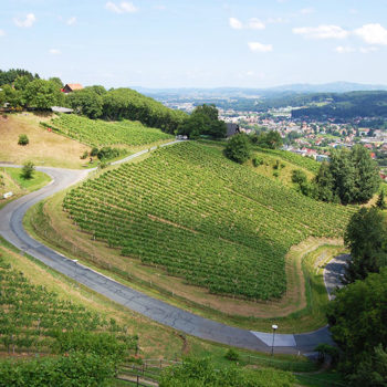 View of the vineyards from Deutschlandsberg Castle, Styria, Austria